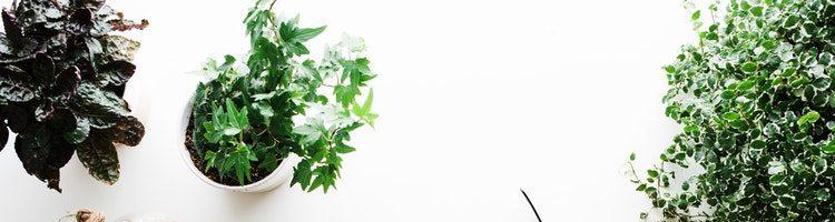 花を見て癒されたい☆オフィスにおすすめの観葉植物